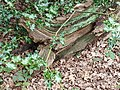 Epping Forest 20170727 112836 (49374157823).jpg