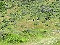 Equestrians - panoramio.jpg