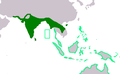 Esacus recurvirostris and Esacus magnirostris ranges.png