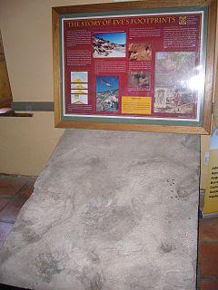 Eves footprint