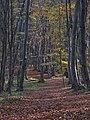Faget forest (3043473384).jpg