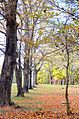 Fall trees outside cabin 1 at Staunton river state park (15649972439).jpg