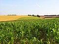 Farmland, East Ilsley - geograph.org.uk - 902379.jpg