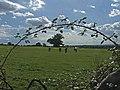 Farmland, Long Street, Upshire, Essex - geograph.org.uk - 227786.jpg