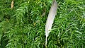 Feather in garden.jpg