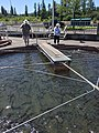 Feeding Fish at Hatchery.jpg