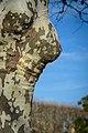 Female Nature Camouflage ;-) (27647951658).jpg