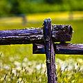 Fence + Field (2686305296).jpg