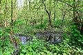 Feuchtgebiet im Bruchwald.jpg