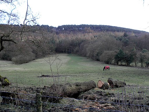 Field opposite Ox Pasture Hall Hotel - geograph.org.uk - 1778116