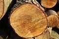 Firewood (184190053).jpeg