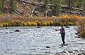 Fisherman on Gardner River (353dcdf1-1415-4468-accf-4626fd78ef49).jpg