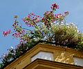 Fleurs sur un toit.JPG