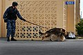 Flickr - Official U.S. Navy Imagery - Navy security dog handler take part in antiterrorism exercise..jpg