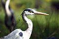 Flickr - law keven - Gone Hunting.....jpg