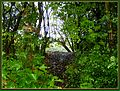 Flickr - ronsaunders47 - A GAP IN THE UNDERGROWTH...jpg