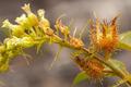 Flores da trilha do Mirante do Caim - Igatu 10.png