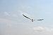 Florida Pelican rear view fliing on Bradenton Beach.jpg