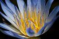 Flower(byChristopherJansz).jpg