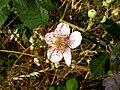 Flower200906 1.jpg