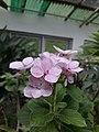 Flower20170706 151544.jpg
