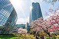 Flower viewing event in Tokyo, Japan; April 2014 (08).jpg