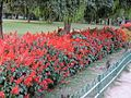 Flowers in spring season,Purana Qila ,Delhi 01.jpg