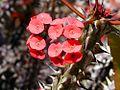 Flowers throns plants.jpg