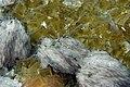 Flussspat DSCF0464.jpg