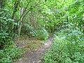 Footpath through the woods - geograph.org.uk - 870624.jpg