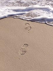 Footprints in the sand of a beach.