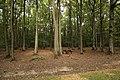 Forêt Départementale de Méridon à Chevreuse le 29 septembre 2017 - 02.jpg