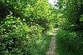 Forêt domaniale de Bois-d'Arcy 11.jpg