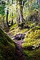Forest (15323684730).jpg