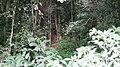 Forest @ Pambadum Shola NP - panoramio (1).jpg