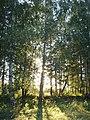 Forest - panoramio - Supraliminal.jpg