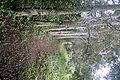 Forest Walk - Hans Cottage Botel - Near Cape Coast - Ghana (4735560070).jpg