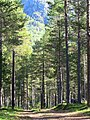 Forest in the morning light of August.jpg
