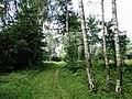 Forest near Dunajec in Piaski Drużków.jpg