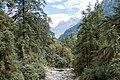 Forest near Timang - Annapurna Circuit, Nepal - panoramio.jpg