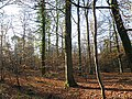 Forest of Dean near Edge End - geograph.org.uk - 1095421.jpg