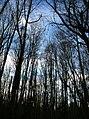 Forest treeline - Gresham, Oregon.jpg
