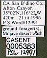 Formica perpilosa casent0005383 label 1.jpg
