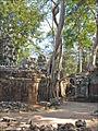 Fromager dans lenceinte du temple Ta Prohm (Angkor) (6844861288).jpg