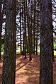 Fruška Gora National Park07.jpg