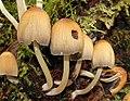 Fungus, Crawfordsburn Glen (25) - geograph.org.uk - 1477863.jpg