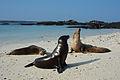 Galápagos Inseln, Ecuador (13918647734).jpg