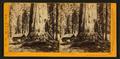 Galen's Hospice, Mariposa Grove, Mariposa County, Cal, by Watkins, Carleton E., 1829-1916 2.png