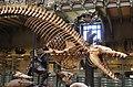 Galeries d'Anatomie comparée et de Paléontologie (19719868404).jpg