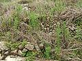 Gaotou - Jin Mountain - terrace remainders - DSCF3288.JPG